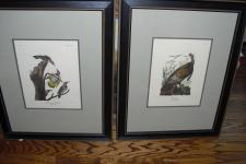 Four bird prints. Engraved by R. Havell